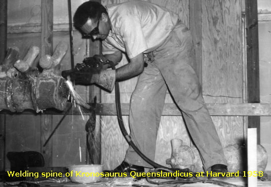 Welding spine of Kronosaurus Queenslandicus at Harvard 1958